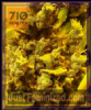 710 Genetics Lemon AID Fem 5 Marijuana Seeds